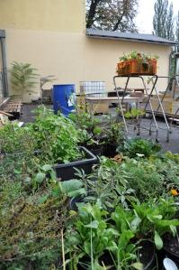 garden.lab_Reininghaus_01_kl